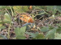 Flora's Story. #Herbal, #Teas, Natural Healing. Video spotlight.