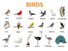 birds-visual-vocabulary