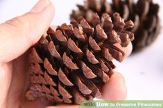 Image titled Preserve Pinecones Step 1