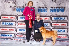 Winter Dog Show, 2014. FCI5: Loukkaharjun Lapin Ukko, Finnish Spitz