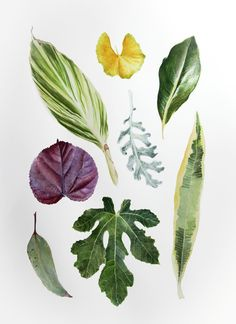 Tu recepcja — Botanical watercolors by Rachael Barkess