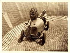 Unidentified lion and female Wall of Death driver from back in the day.   I'd like to drive a lion places...