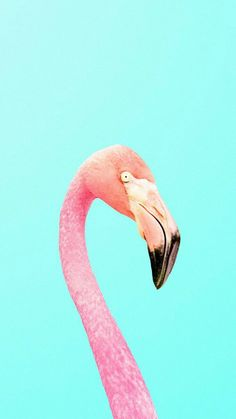 Flamingo Minimalist iPhone Wallpaper by Wallpaper Flamingo, Summer Wallpaper, Wallpaper For Your Phone, Animal Wallpaper, Cool Wallpaper, Mobile Wallpaper, Pattern Wallpaper, Colorful Wallpaper, Fabric Wallpaper