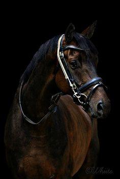 Freddy The Horse (2)