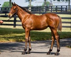 The future Triple Crown (2015) Winner, American Pharoah,  as a foal a few years ago.