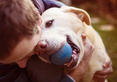 How do you show your dog you love him? 4 Extra Ways to Show Your Dog You Love Him http://petvanlines.com/4-extra-ways-show-dog-love/