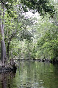 A river runs through it ~ Sopchoppy, Florida :)