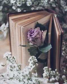 Image shared by granmaster_by on We Heart It Violet Aesthetic, Flower Aesthetic, Book Aesthetic, Aesthetic Pictures, Aesthetic Photo, Beautiful Flower Quotes, Beautiful Flowers Wallpapers, Cute Wallpapers, Fantasy Photography