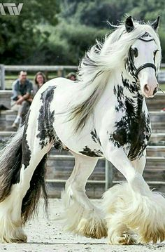 The Best horses on the world 🤞Irish-cob Beautiful Creatures, Animals Beautiful, Most Beautiful Horses, Animals And Pets, Cute Animals, Gypsy Horse, Gypsy Vanner Horses, Majestic Horse, Majestic Animals