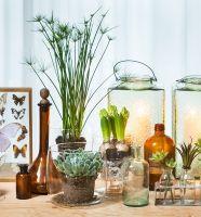 Stoere #vetplanten en vrolijke #voorjaarsbloeiers, geen voor de hand liggende combinatie... Maar toch verrassend leuk!