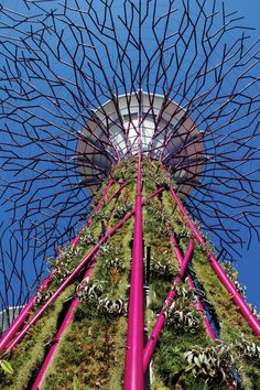 Case study of Supertrees design for Gardens by the Bay, the international leisure attraction in Singapore, created by UK landscape architects Grant Associates.