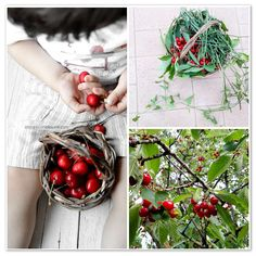 cherry Cherry Baby, Basket, Gift Wrapping, Gifts, Garden, Instagram, Canning, Gift Wrapping Paper, Presents