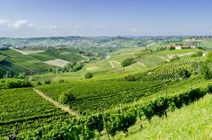 Le langhe, the wine country of this region