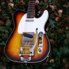 #Teletuesday in the woods. That background is real we promise.