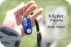 Klicker-Training beim Hund Sheltie, Train, Little Puppies, Parenting, Doggies, Strollers