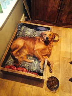 Scaffolding board dog bed by tcindustrialvintage on Etsy
