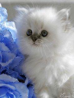 Eu conheci muitos pensadores e muitos gatos, mas a sabedoria de gatos é infinitamente superior.