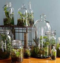Terrariums: gardening in a bottle - Diy, Lifestyle