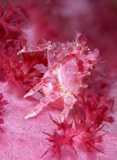 a very purple soft coral crab by edpdiver, via Flickr