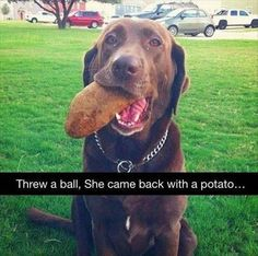 This sweet, enthusiastic girl who wanted to improve on the game of fetch. | 25 Dogs Who Aren't Going To Win A Nobel Prize Anytime Soon