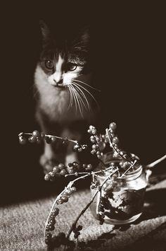 Cats in Photography: Zemfira Khalitova