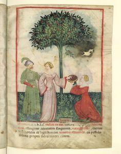Nouvelle acquisition latine 1673, fol. 13, Récolte des jujubes. Tacuinum sanitatis, Milano or Pavie (Italy), 1390-1400.