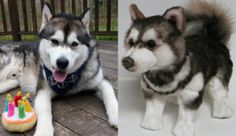 100% custom stuffed animals made to look just like YOUR pet! They're called Cuddle Clones! This is Tikanni the Husky mix and his Cuddle Clone :)