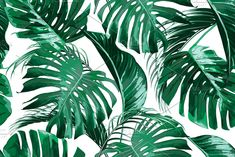 Tropical jungle leaves pattern green texture nature design pattern background summer spring art exotic wallpaper flora plant garden vector illustration leaf decoration fashion california beach modern fabric feminine palm botanical painting artwork seamless textile fashionable tropic print jungle hawaii brazil miami branch aloha trend paradise leaves