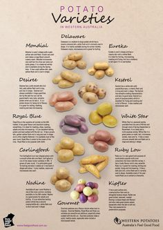 Types of potatoes - Pearl E Queen February 2013 Cooking 101, Cooking Recipes, Healthy Recipes, Fruit And Veg, Fruits And Veggies, Vegetables, Potato Facts, Types Of Potatoes, Potato Types