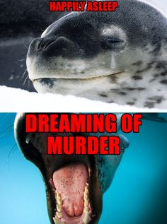 Leopard seal. | 9 'Cute' Animals You Really Ought To Be More ScaredOf