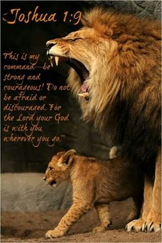 Like a LION! I live by this bible verse and always will. Images Bible, Gato Grande, Lion Of Judah, Lion Cub, Pet Lion, Be Strong And Courageous, Stay Strong, Bible Scriptures, Big Cats