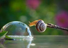magical-photos-of-snails-2