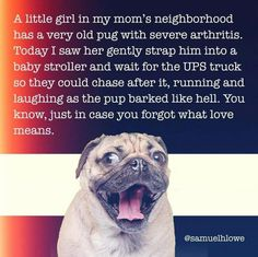"""little girl in my mom's neighborhood ª : s a. very old pug with severe arthritis. if oday I saw her gently strap him into a. aby stroller and wait for the UPS truck they could chase after it, running and i"""": ughing as the pup barked like hell. Funny Dogs, Funny Animals, Cute Animals, Funny Memes, Animal Fun, Pug Love, I Love Dogs, Cute Dogs, Thoughts"""