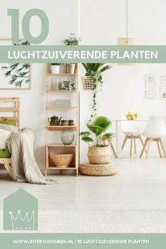 Met deze prachtige kamerplanten haal je een luchtzuiveringsinstallatie in huis. Hoe meer van deze luchtzuiverende planten in je huis staan, hoe beter. Daarnaast zijn deze luchtzuiverende planten ook zeer geschikt voor kantoor of je werkplek in huis vanwege we zorgeloze onderhoud. #planten #kamerplanten #luchtzuiverendeplanten #zuivering #interiorqueen #interior #kantoor #werkplek #wonenmetplanten