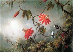 Страстоцветы и колибри. Мартин Джонсон Хед