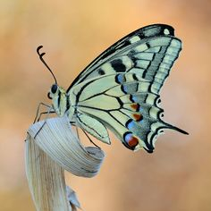 Untitled   Photo.net Butterfly Images Photography, Image Photography, Galleries, Insects