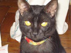 O grande, o maior de todos, el rey, Chat Noir ... Kiko Preto. Que saudades, meu grande amor.