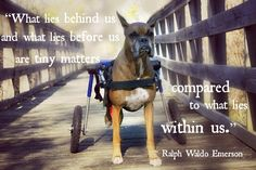 "Inspirational quote of the week:  ""What lies behind us and what lies before us are tiny matters compared to what lies within us."" ~ Ralph Waldo Emerson #walkinwheels #cybermonday #handicappedpets"