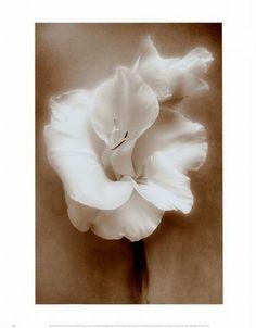 Super gladiolus flower tattoo black and white ink ideas Full Neck Tattoos, Side Neck Tattoo, Cute Dragon Tattoo, Dragon Tattoo Designs, Gladiolus Flower Tattoos, Traditional Tattoo Cat, Small Mermaid Tattoo, Geometric Rose Tattoo, Matching Sister Tattoos