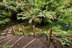 Semi-tropical species thrive in the Jungle at Lost Gardens of Heligan in Cornwall, England