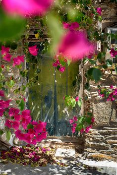 Behined the Bougainvillea - null