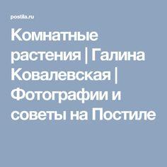 Комнатные растения | Галина Ковалевская | Фотографии и советы на Постиле