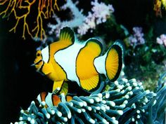 View enchanting underwater images of fish and other sea creatures. Dive into the depths and enjoy the beauty of marine life. Colorful Animals, Colorful Fish, Tropical Fish, Fish Screensaver, Coral Reef Pictures, Ocean Underwater, Underwater Images, Fish Wallpaper, Nature Wallpaper
