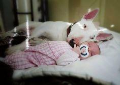 Los niños que crecen con perros desarrollan mayor responsabilidad y sensibilidad