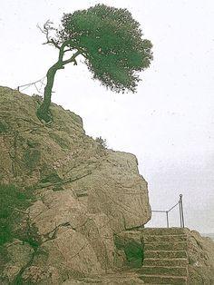 'Der Klippenbaum' von Dirk h. Wendt bei artflakes.com als Poster oder Kunstdruck $18.03