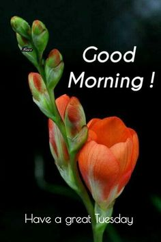 Happy Good Morning Images, Good Morning Clips, Good Morning Happy Saturday, Good Morning Beautiful Pictures, Latest Good Morning Images, Good Morning Friends Quotes, Good Morning Beautiful Quotes, Good Morning Picture, Morning Pictures