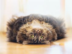 Can You Guess The Phobias? Galeophobia- fear.of.cats- oo ...