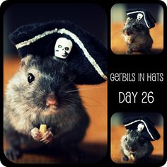 gerbils in hats