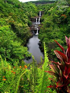 Umauma Falls from the overlook in the World Botanical Gardens ~ Big Island, Hawaii