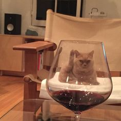 """""""Are you really going to drink ANOTHER glass Sharon?"""""""